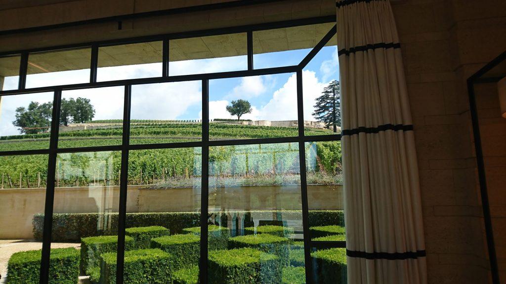 Les vignes du Château Pavie