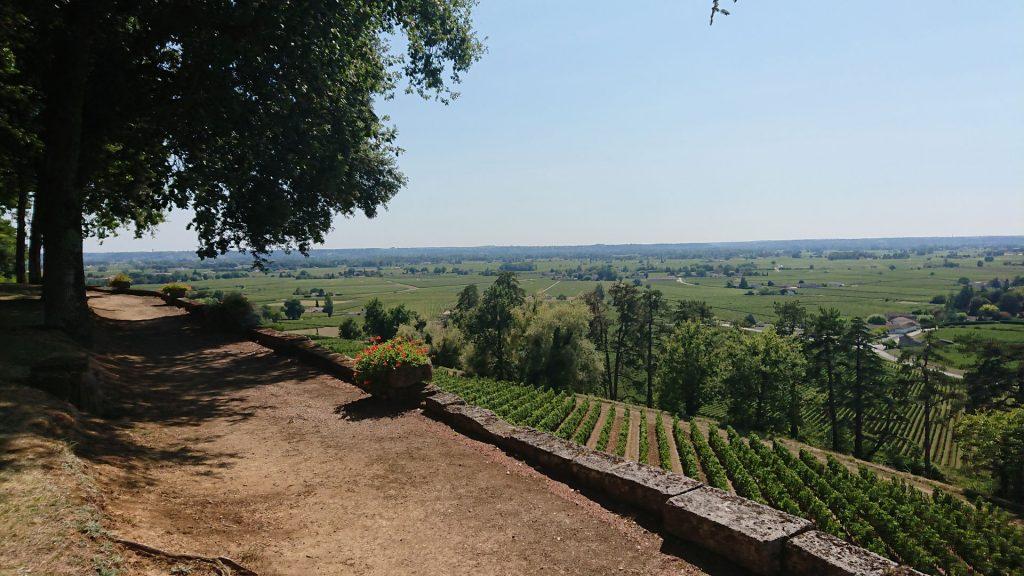 Les vignes en terrasse de Pressac